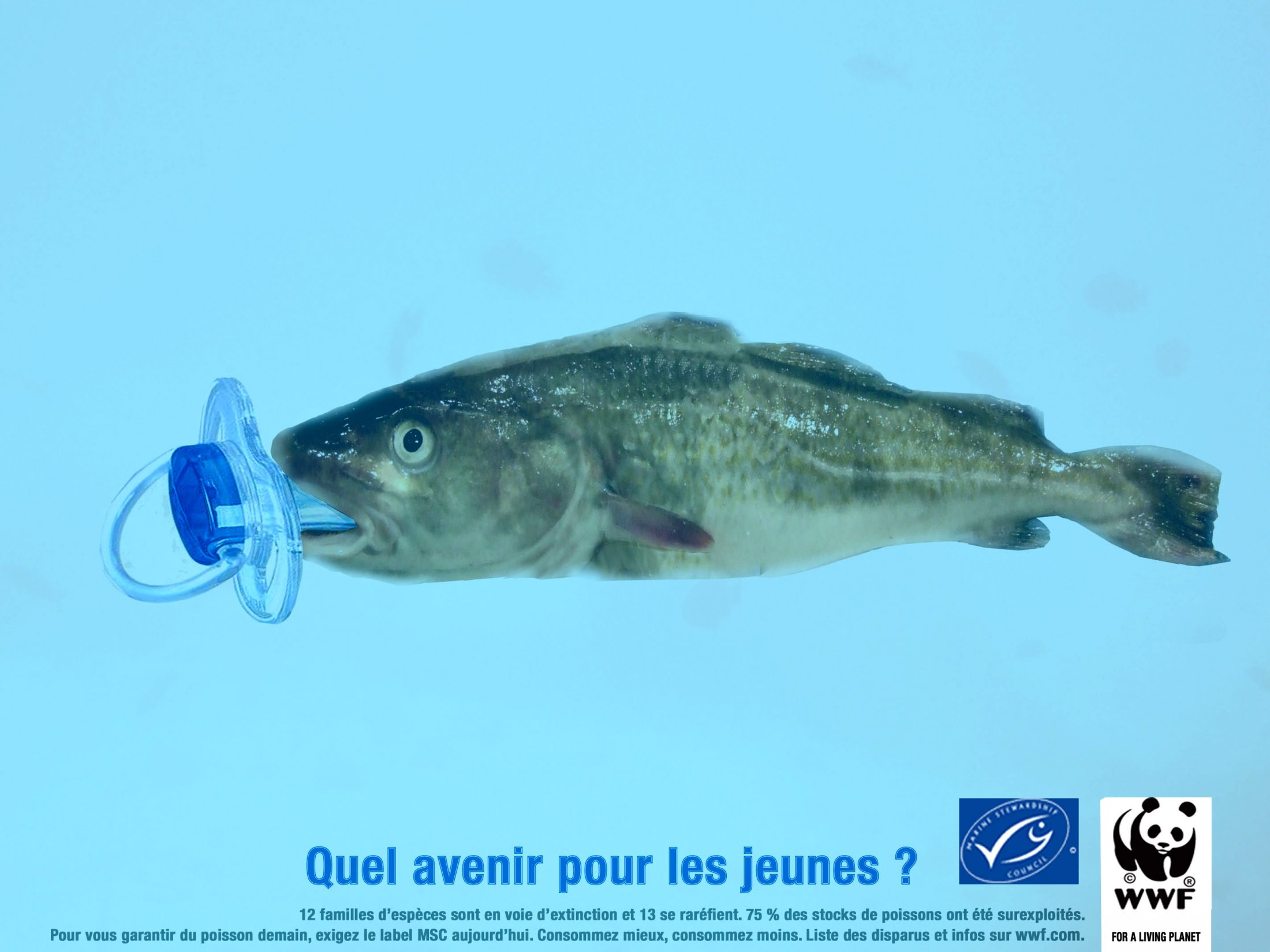 Cabillaud / WWF