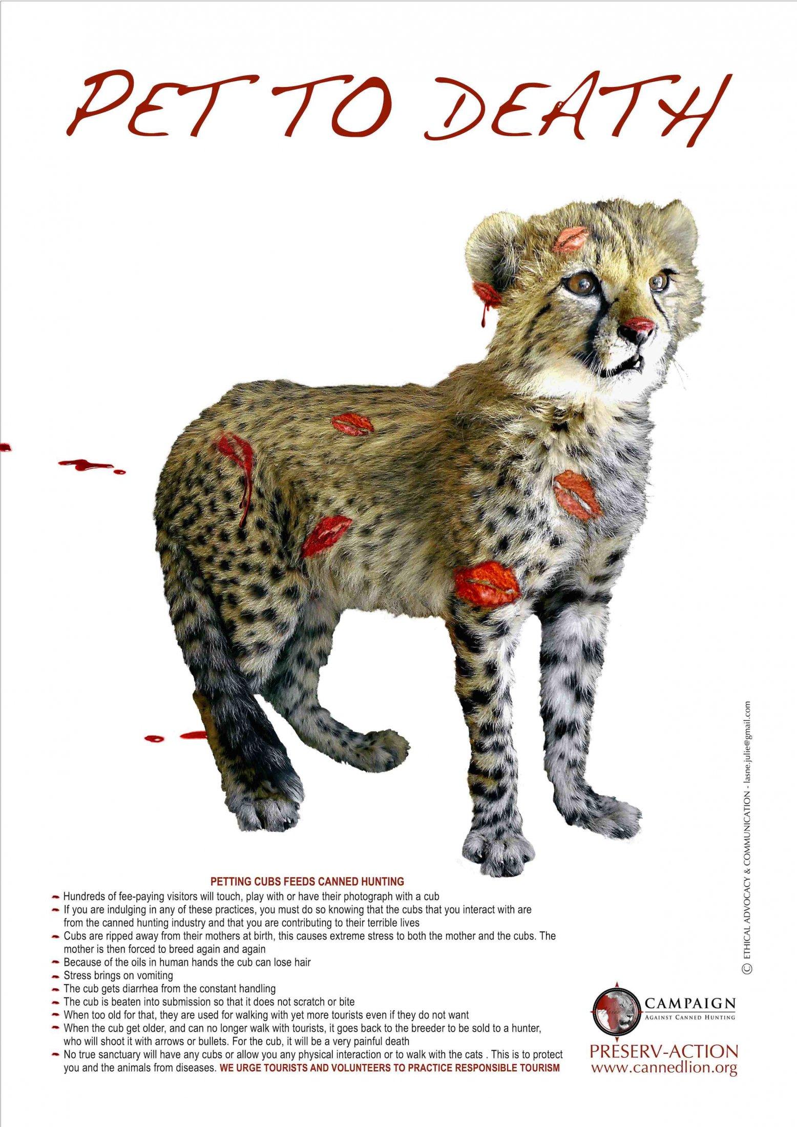 Cheetah Petting Press Jpeg