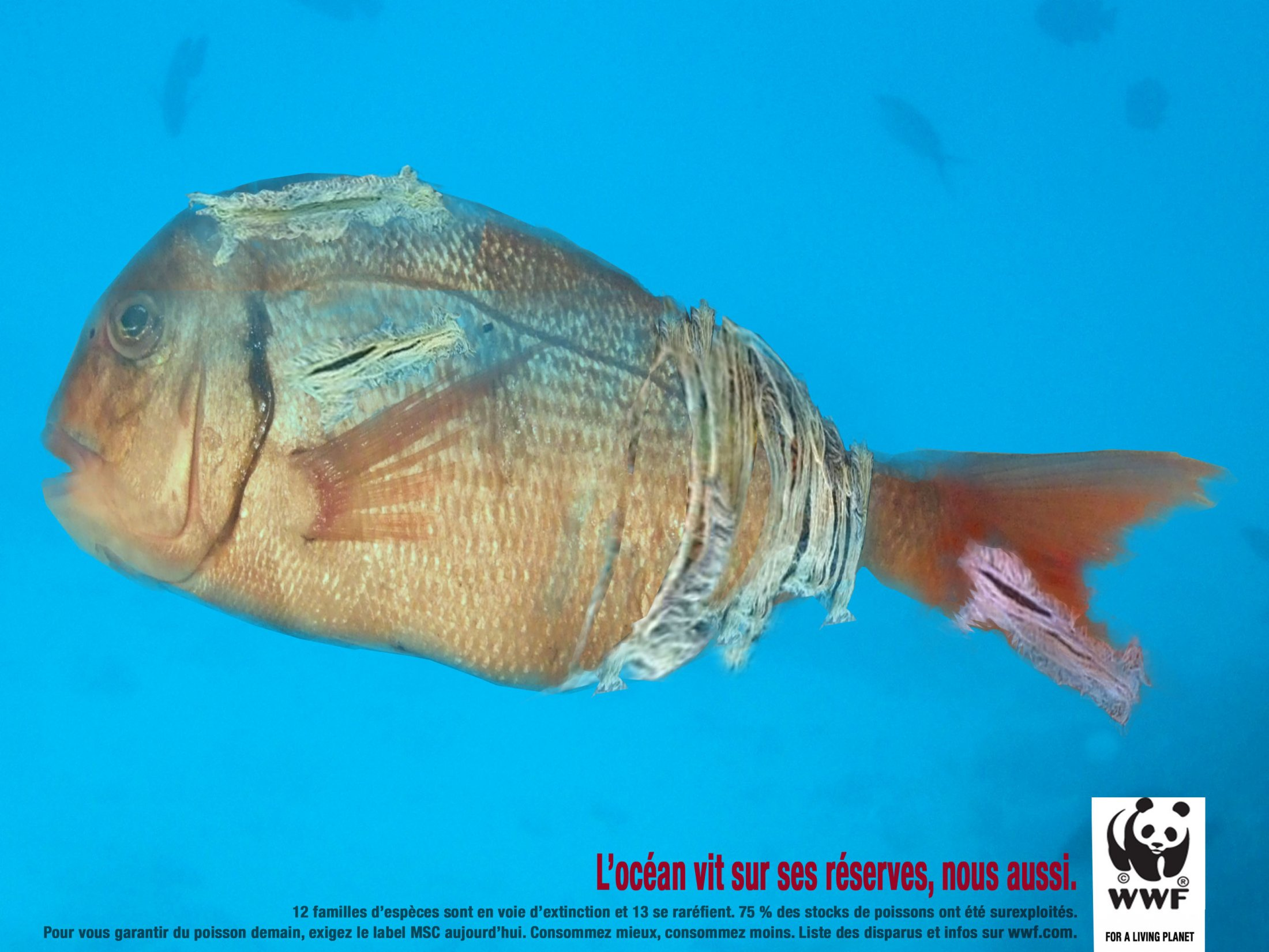 Poisson Rapiécé / WWF