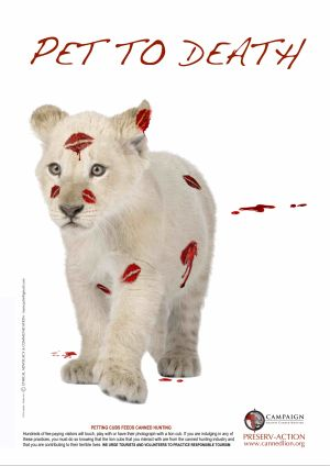 Lion White Petting Poster / CACH