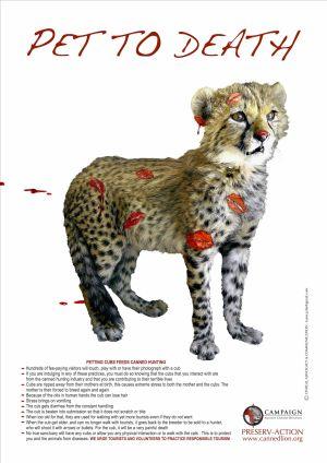 Cheetah Petting Press  / CACH